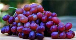 purple_grapes