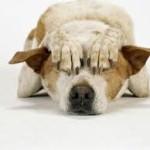 dogs terrified on diwali