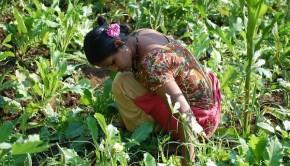 Nutri gardens in Maharashtra