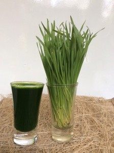 Wheatgrass Shot_Apple A Day